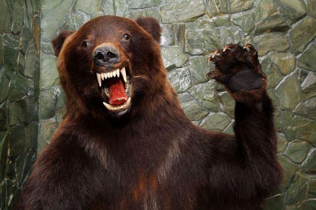 Bear-attacks